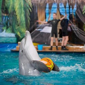 Дельфинарии, океанариумы Менделеевска