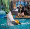 Дельфинарии, океанариумы в Менделеевске